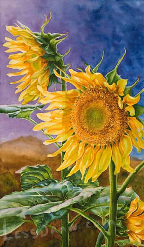How To Draw Sunflower Step By Step Lessdraw
