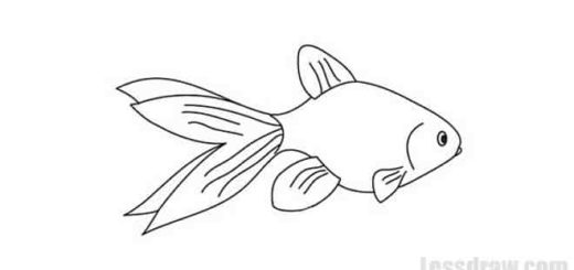 How to Draw a Fish for Beginners